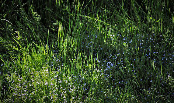 In The Morning, Green Grass, Green, Blades, Meadow