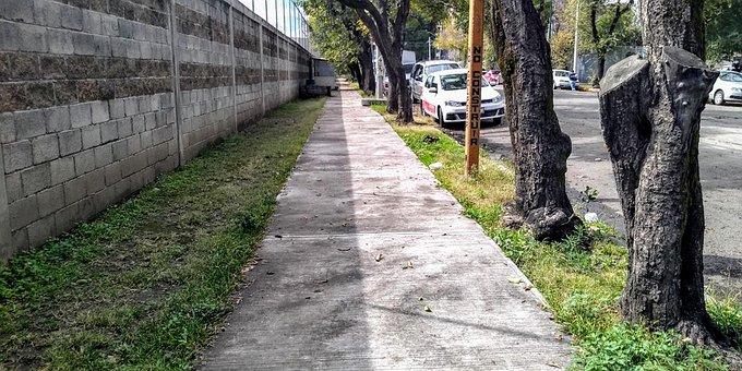 Street, Car, Tree, Urban, Mexico
