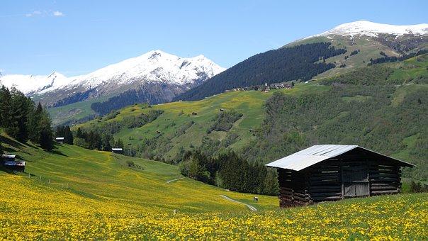 Spring, Mountain Landscape, Stall, Dandelion, Yellow