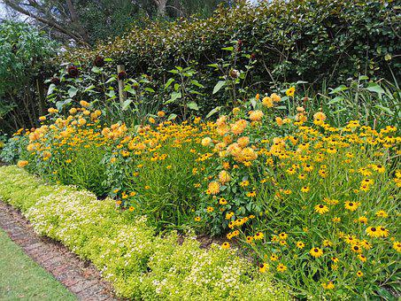 Yellow, Flower Bed, Summer Time