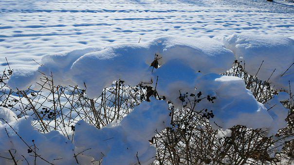 Snow, Winter, Frost, Landscape, Cold, Nature, Tree