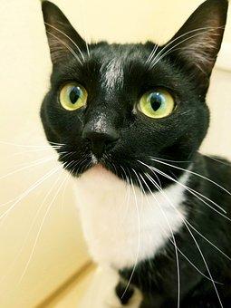 Cat, Kitty, Kitten, Feline, Cute, Whiskers, Black