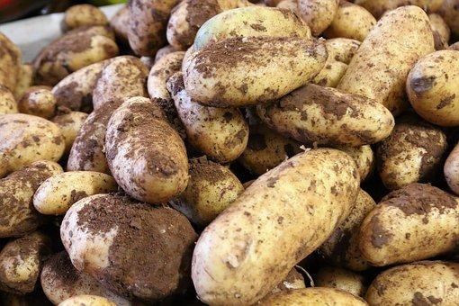 Potato, Potatoes, Potato Field, Potato Plant, Food