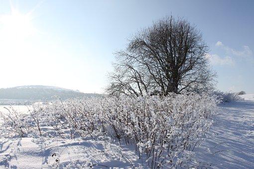 Winter, Snow, Tree, Ice, Cold, Snow Landscape, Nature