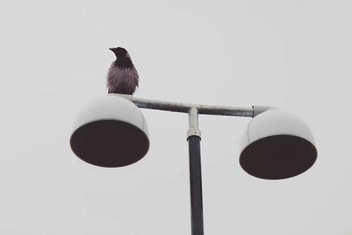 Animal, Bird, Raven, Crow, Rook, Lantern, Gloomy