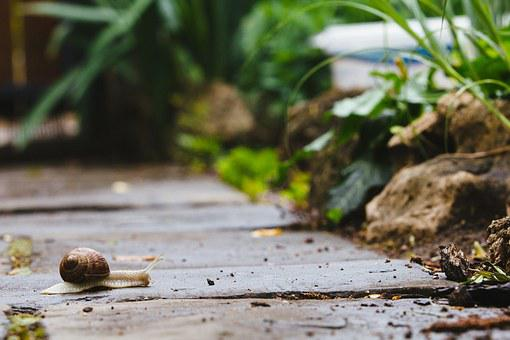 Snail, Garden, Path, Nature, Slug, Animal, Plant, Slow