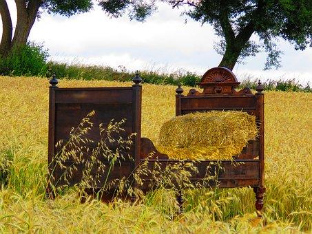Bed, Cornfield, Bed In The Corn Field, Straw, Cozy