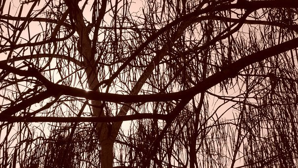 Trees, Sepia, Branches, Leaves, Woods, Trunk, Wodden