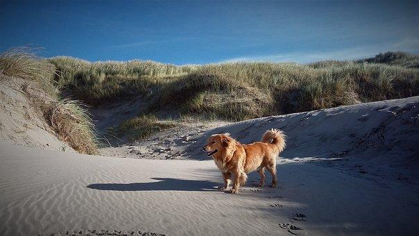 Dog, Beach, Dunes, Grass, Dog On Beach, Most Beach