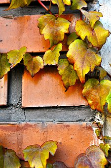Autumn, Fall, Hedera Helix, Wall, Brick, Edge