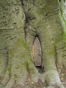 Door, Elf, Trunk, Tree, Fairy, Nature, Magic, Entrance