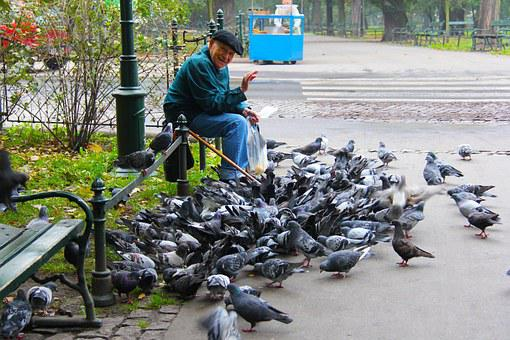 Man, Old Man, Friendly, Smiling, Feeding, Pigeons