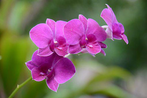 Orchid, Purple, Refreshing, Spider Webs, The Green