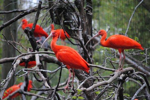 Orange, Birds, Nature, Animal, Summer, Red, Branch