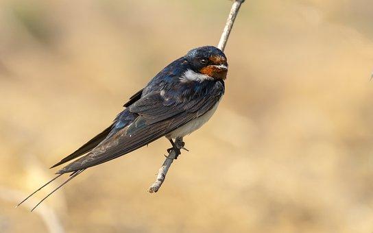 Bird, Bird On Stick, Swallow