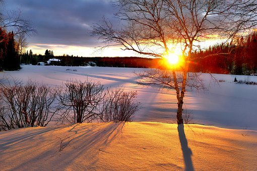 Trees, Birch, Wood, Snow, Landscape, Nature, Sun