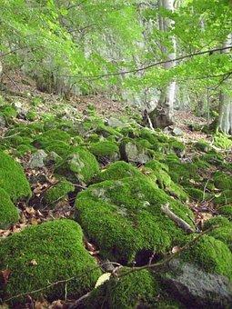 Moss, Forest, Forest Floor, Vegetation