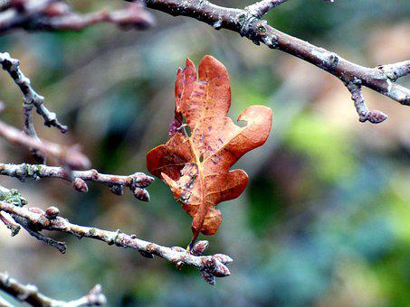 Leaf, Branch, Withered, Dry Leaf, Dried Leaf, Tree