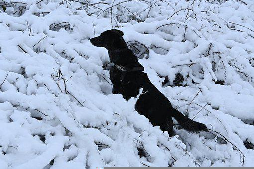 Dog, Snow, Winter, Nature, Cold, Cute, Fur, Hairy