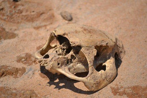 Sand, Bones, Dead, Dry, Desert, Skeleton, Wild, Creepy