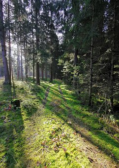 Forest, Sun, Moss, Away, Shadow, Trees, Nature