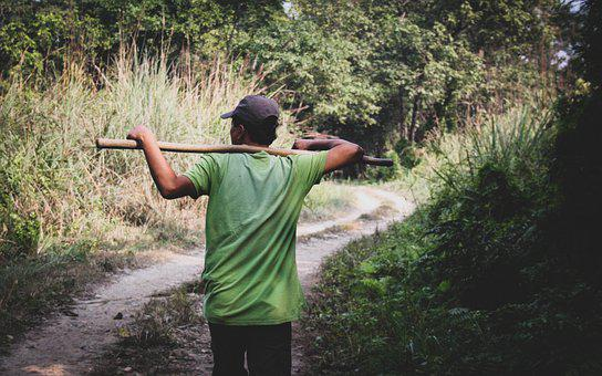 Jungle, Nepal, Chitwan, Guide, Path, Travel, Oneshoot