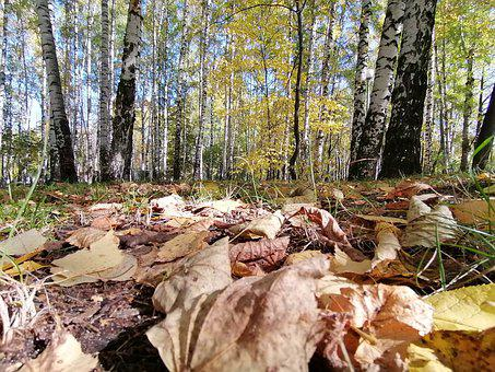 Trees, Autumn, Nature, Leaves