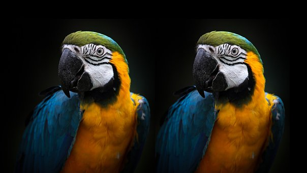 Macaw, Blue And Gold, Parrot