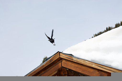 Bird Flight, Black Bird, Crow Flies, Roof, Snow