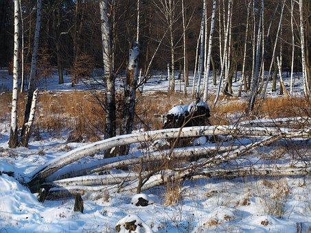 Birch, Winter, Moor, Snow, Landscape, Wintry, Cold