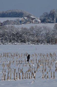 Field, Snow, Wintry, Winter, Landscape, Nature