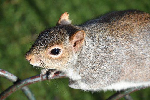 Squirrel, London, Rodent, Animals, Animal, Mammal, Cute