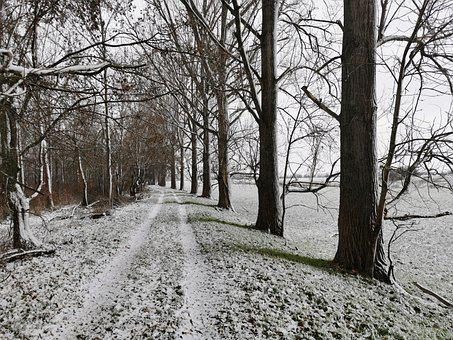 Winter, Away, Traces, Snow