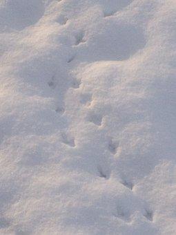 Snow, Footprints, Winter, Footprint, Bird, Track