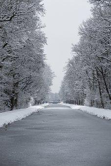 Winter, Snow, Ice, Nature, Wintry, Cold, Frozen, Trees