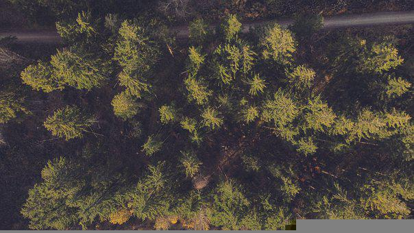Aerial View, Trees, Forest, Drone, Nature, Landscape