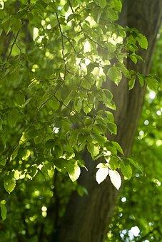 Park, Background, Wallpaper, Foliage, Sun, Recreation