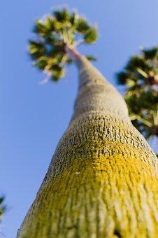 Palm Trees, Venice, Beach, California, Sky, Tourism