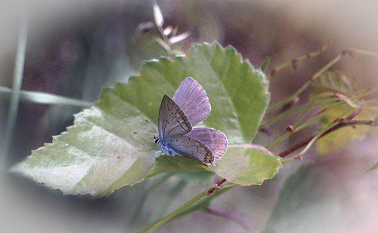 Butterfly, Insect, Leaf, Sprig, Nature, Wings, Macro