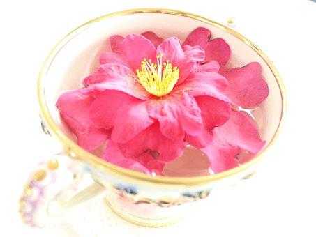Teacup, Flowers, Camellia, Cup, Flora, Drinks, Tea Cup