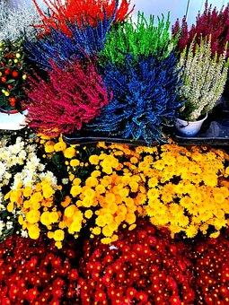 Flowers, Flowershop, Colorfulflowers, Flowerbox, Plants