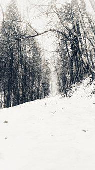 Winter, White, Trees, Nature, Snow, Frost, Country