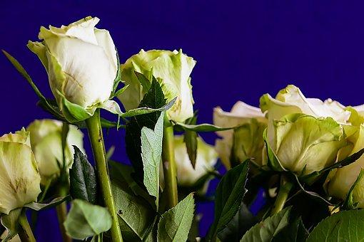 Rose, Flower, Love, Valentine, Bloemengroet