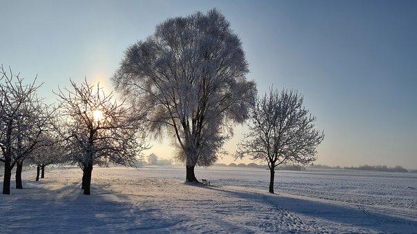 Winter, Ice, Snow, Cold, Frost, Frozen, Landscape
