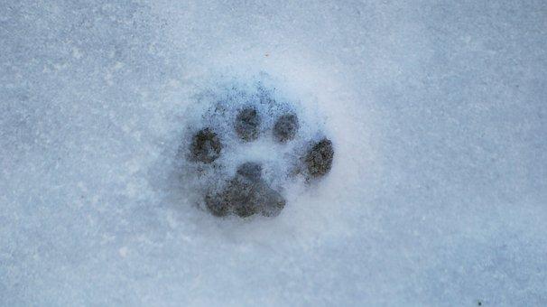 Ice, Crystal, Winter, Snow, Macro, Frozen, Hoarfrost