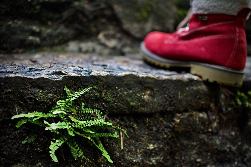 Hiking, Shoe, Red, Green, Shoes, Market, Nature