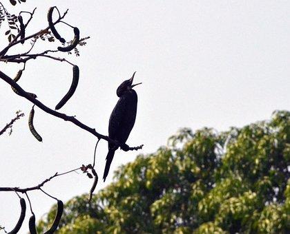 Cormorant, Bird, Animal, Plumage, Feather, Nature