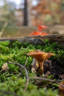 Mushrooms, Nature, Autumn, Forest Floor, Moss