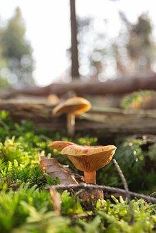 Autumn, Forest, Mushrooms, Forest Floor, Nature, Moss