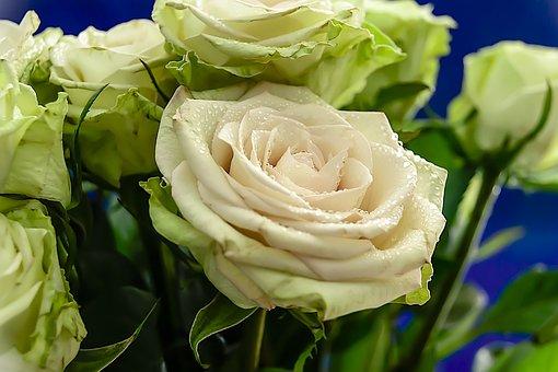 Roses, Rose, Flowers, Valentine, Romance, Background